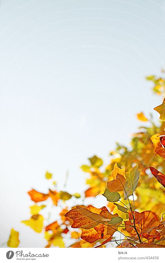 autumn quarter Environment Nature Landscape Plant Air Sky Cloudless sky Autumn Climate Beautiful weather Garden Park Forest Multicoloured Yellow Gold Red Moody