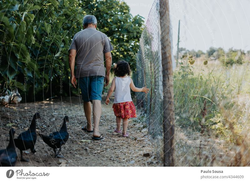 Child and grandfather walking with ducks Rear view Grandfather Grandparents Caucasian Family & Relations family Farm Authentic Man Adults Grandchildren Together
