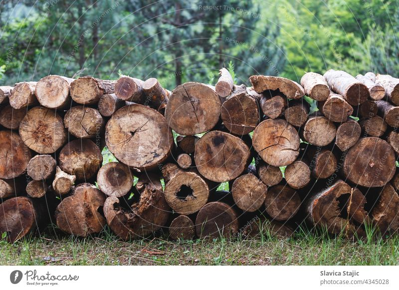 Log stack. Logs of pine tree stacked before transportation. Selective focus wood firewood Brown Firewood Stack of wood texture Tree trunk Wood background