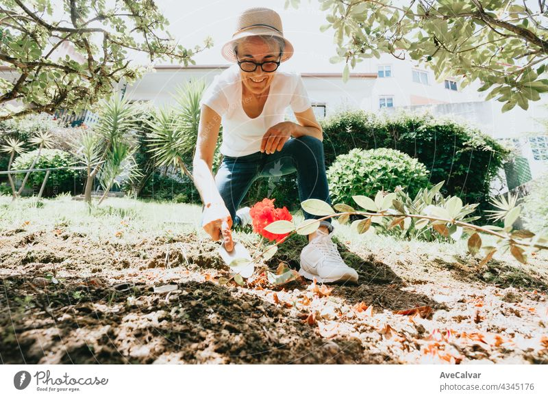 gardening and people concept - happy senior woman planting flowers at summer garden grandmother person elderly retired mature pensioner retirement aged hat