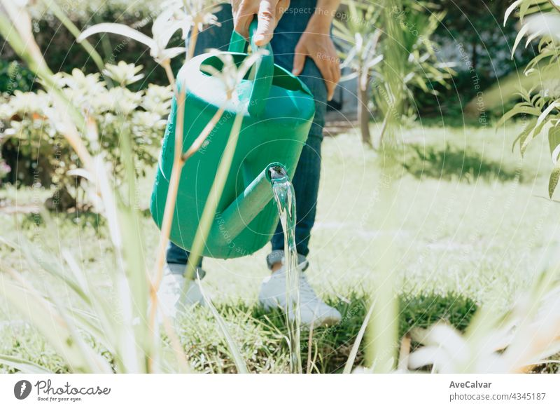 Watering can on the garden,Watering the garden at sunset,Vegetable watering can hobby person gardening man growth backyard care gardener woman young authentic