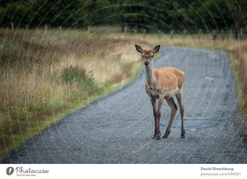 WHW hikers Vacation & Travel Hiking Nature Autumn Plant Grass Moss Traffic infrastructure Wild animal 1 Animal Blue Brown Yellow Gray Green Threat Roe deer