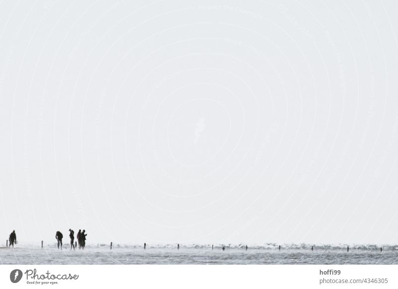 People in the mudflats Mud flats Crowd of people Human being Walk along the tideland North Sea Landscape Low tide mudflat hiking tour Slick Nature Horizon Wet