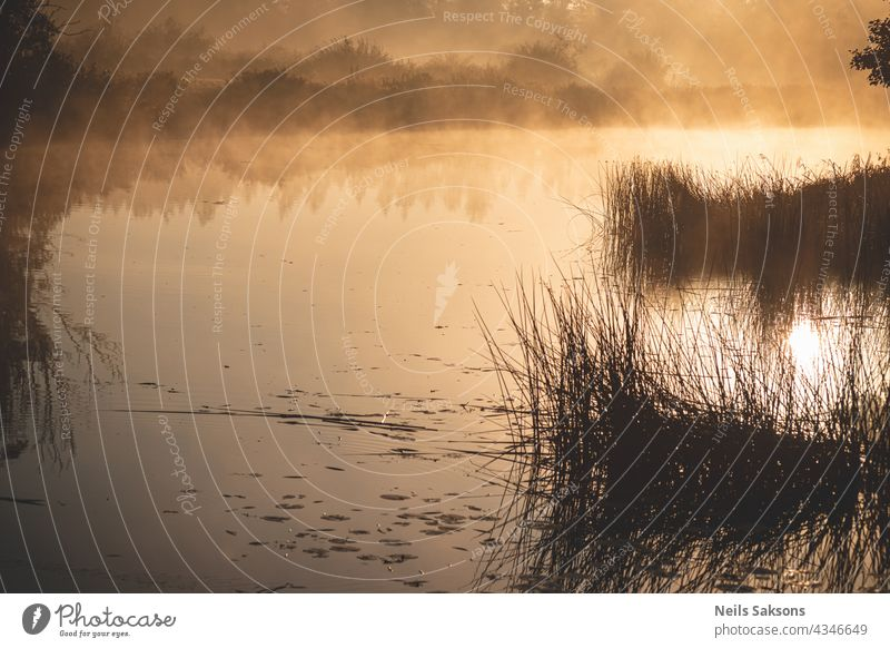sun rises in cold october morning. Fog over the fields and river in Latvia. Reeds and distant shore reflect in smooth water surface. Calm morning without wind. Meadow, bushes and water shine golden
