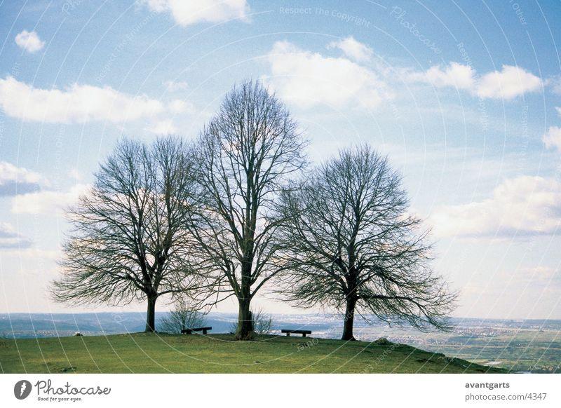 trees Tree Meadow Mountain Landscape