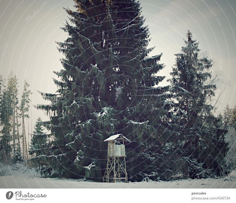toy country Environment Nature Landscape Winter Tree Forest Sign Loneliness Idyll Nostalgia Hunting Blind Fir tree Tall Toys Snowfall Hunter Wild animal