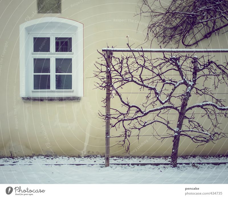 cold and windows Environment Nature Ice Frost Snow Tree Castle Park Wall (barrier) Wall (building) Facade Window Design Loneliness Cold Arrangement Cordon