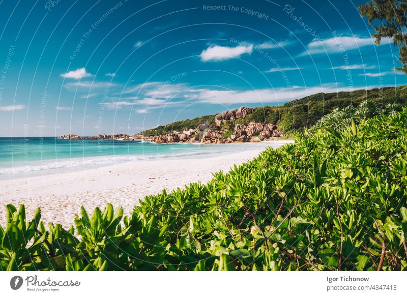 Grand Anse beach at La Digue island in Seychelles. White sandy beach with blue ocean lagoon. Green defocused foliage leaves in foreground seychelles anse grand