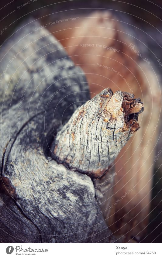 wood Nature Tree Wood Old Brown Gray Slivered Weathered Structures and shapes Tree bark Branch Death Subdued colour Exterior shot Close-up Deserted