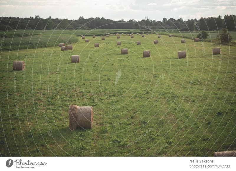 Bright yellow and golden haystacks on agricultural field straw harvesting roll agriculture nature sky outdoor farm wheat bale blue grass summer countryside land