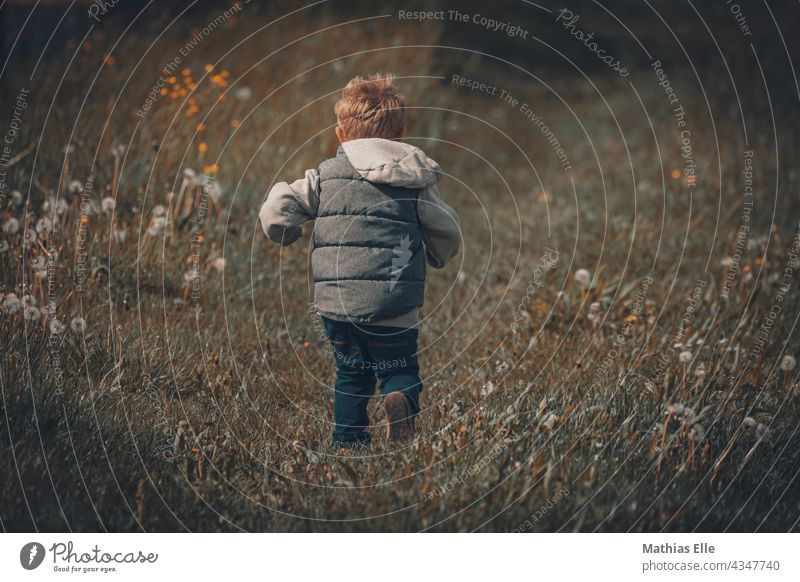 Little June runs across a meadow little child Child Lifestyle Joy Happy Leisure and hobbies Playing Vacation & Travel Family & Relations Human being Summer
