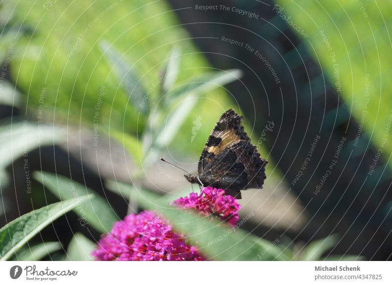 A butterfly on the blossom of a summer lily Butterflies, sun, plants, lilac nature, Spring Colour photo Close-up Shallow depth of field Violet Deserted Detail