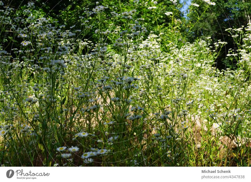 Grass and trees in the sunlight Sun,grass,trees,light,green, Nature Sky Meadow Landscape Plant Exterior shot Environment Deserted