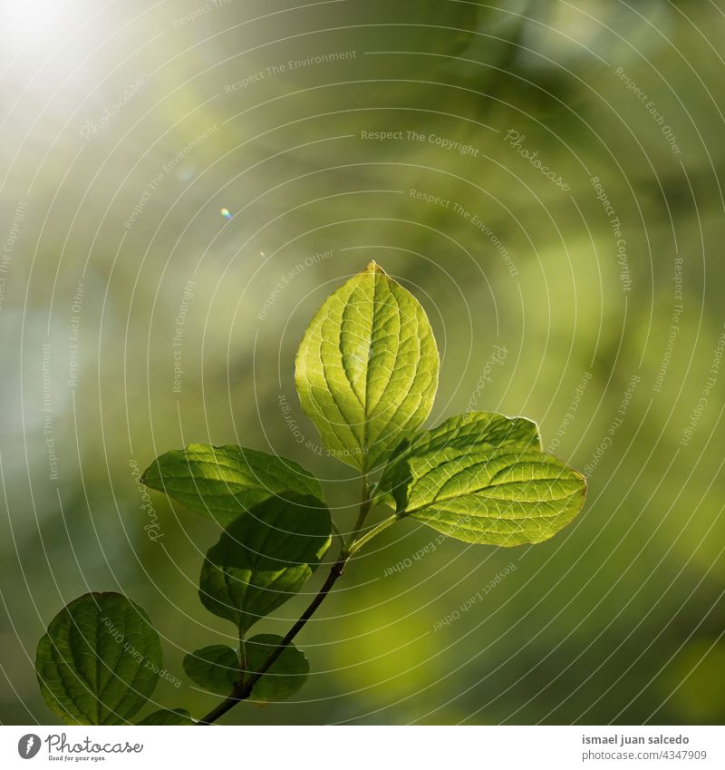 green tree leaves in springtime branches leaf nature natural foliage textured background beauty fragility freshness season summer summertime sunlight