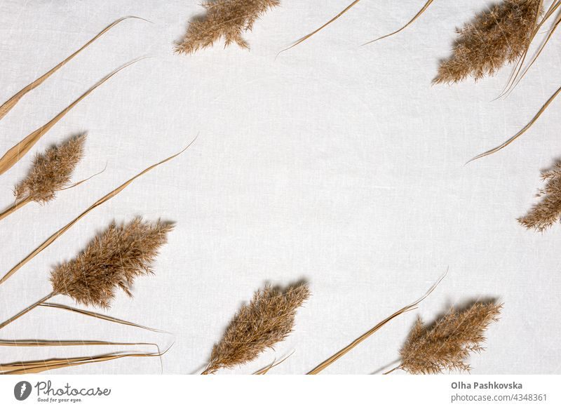 Dried reed flowers frame and copy space on linen natural decoration floral style card texture branch brown organic beige environment foliage grass background