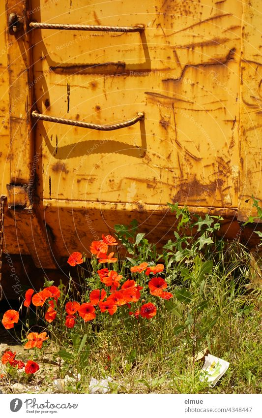 red poppy in front of an orange container / poppy day / nature and technology Corn poppy Poppy poppy blossoms Container Nature Poppy blossom Flower Meadow Red