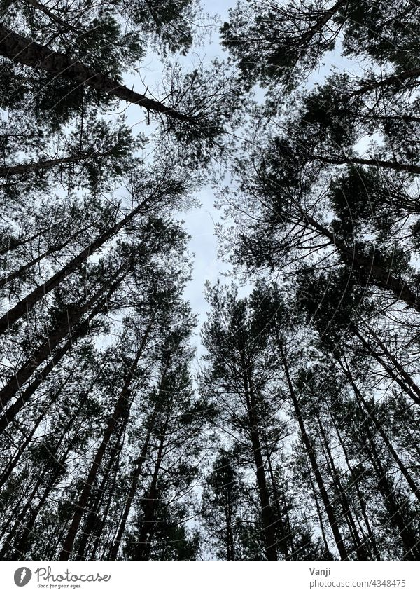 Forest photographed from below Nature Tree Green Day Colour photo Exterior shot naturally Light Environment Deserted Leaf canopy Tree trunk Treetop Growth Tall