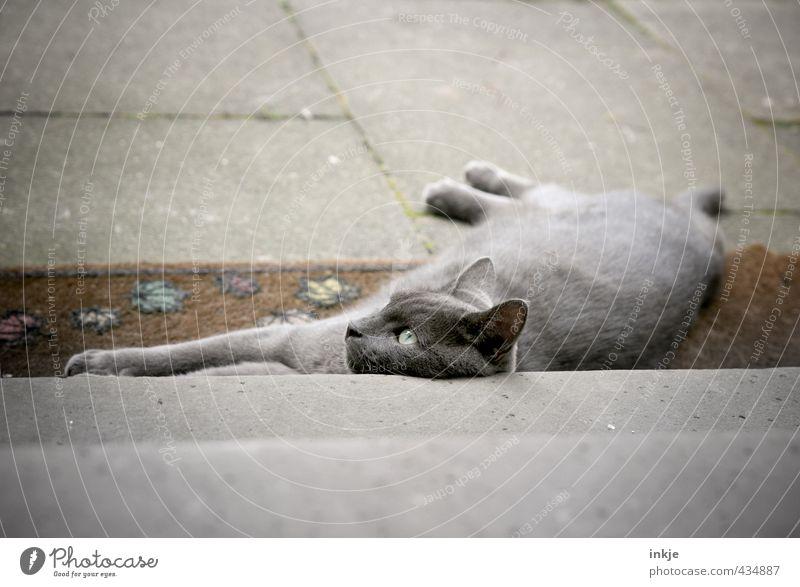 Cat Calm Animal Emotions Lie Moody Stairs Contentment Concrete Break Animal face Serene Pet Domestic cat Terrace Edge