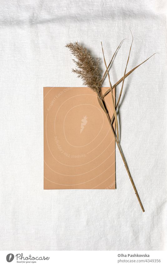Paper sheet and dried reed flower on white linen natural decoration tactile floral style card texture branch brown organic beige environment foliage grass