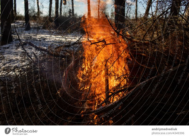 Burning fire. The bonfire burns in the forest. Texture of burning fire. Bonfire for cooking in the forest. Burning dry branches. Tourist fire in the forest. Texture of burning branches