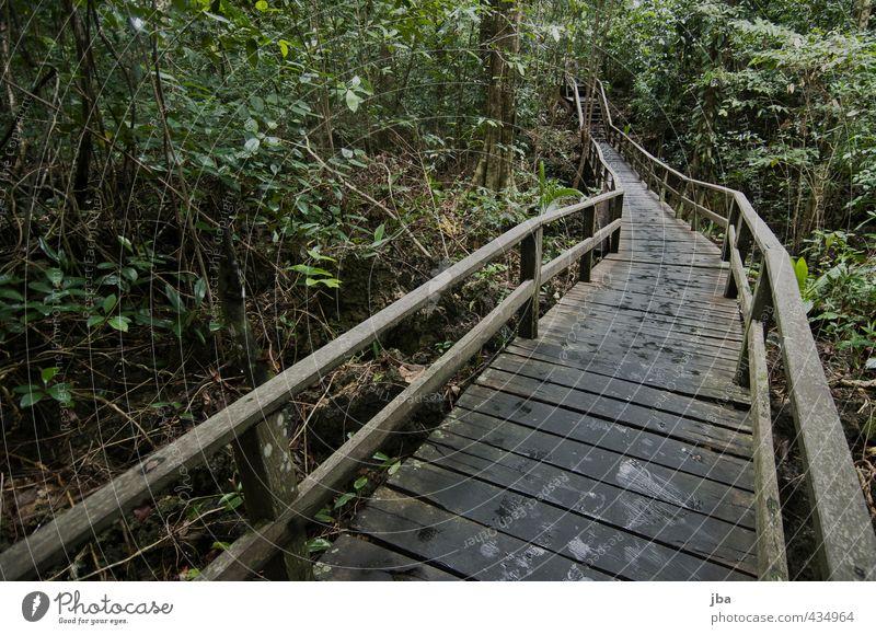 Nature Plant Summer Tree Calm Forest Dark Freedom Wood Stairs Tourism Island Adventure Handrail Summer vacation Traffic infrastructure