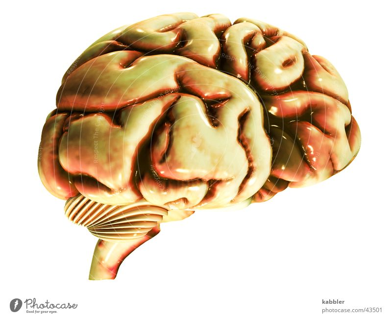 No brain no headache Brain and nervous system Thought Meat Memory Smart Logic Man Circle Attic Head Think