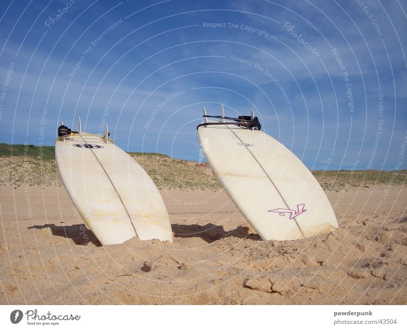 Sun Summer Beach Sports Surfing Surfboard