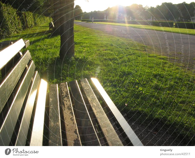 ParkBank Back-light Nymphenburg castle Light Moody Park bench Sunbeam Glittering Green Grass Wood Bench Lighting Lawn Seating
