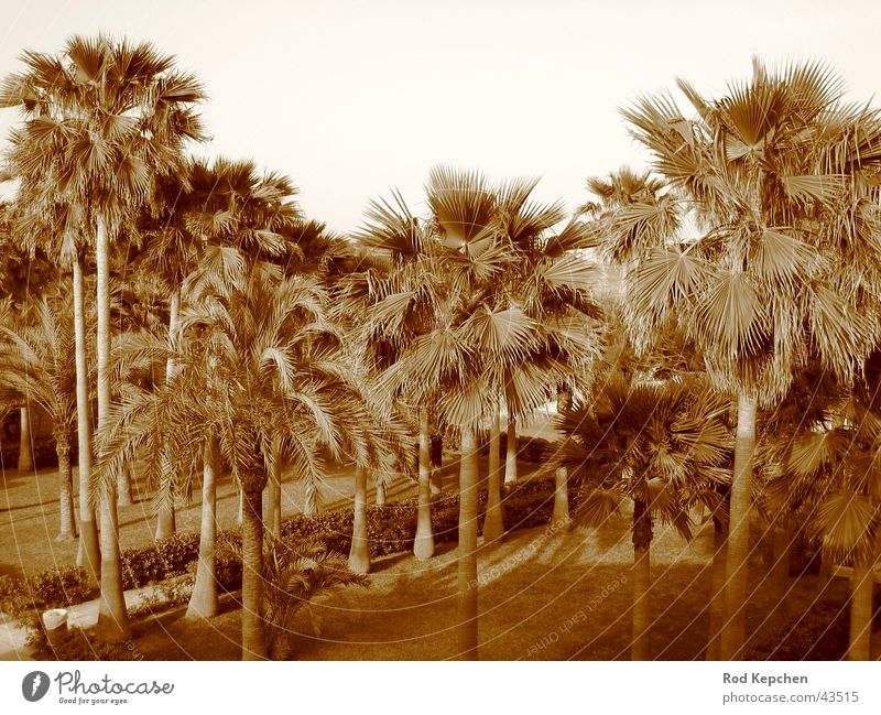 Summer Palms Palm tree Sun Beach Ocean Vacation & Travel Tree Promenade Water Black & white photo