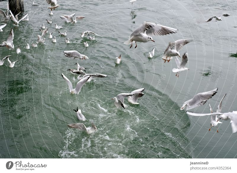 flying seagulls in front of water Gull birds Bird Nature Water River Floating Day Muddled Wild animal from on high Tone-on-tone Gray Subdued colour Deserted