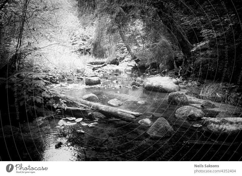 sunny warm summer mid day. Stones and tree trunks in small river. Harsh light monochrome stone boulder tourism idyllic rock nature outdoors landscape copy space