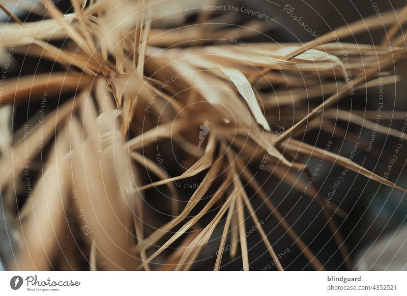 Chamaedorea elegans low-maintenance Shriveled dead Dry leaves Leaf blurriness acuity Brown aridity Desert wag Palm leaf structure background Detail Close-up