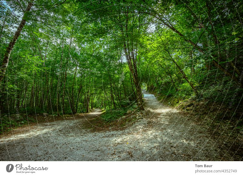 crossroads Lanes & trails Fork fork Left Right Forest Gravel path uphill Wide angle wide angle shot wide-angle view Exterior shot Nature Colour photo Summer