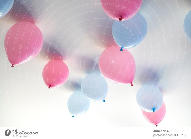gender reveal party blue and pink balloons in living room on white wall definition of a boy or girl, gathering party party decoration pregnancy birth greeting