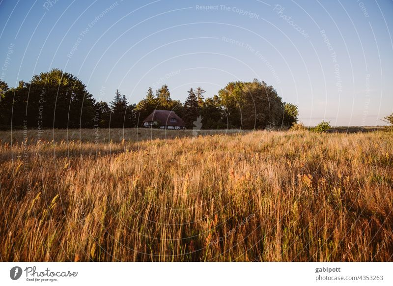 Summer landscape with hidden house in background Field Sky Landscape Exterior shot Half-timbered house Nature Beautiful weather Deserted vacation