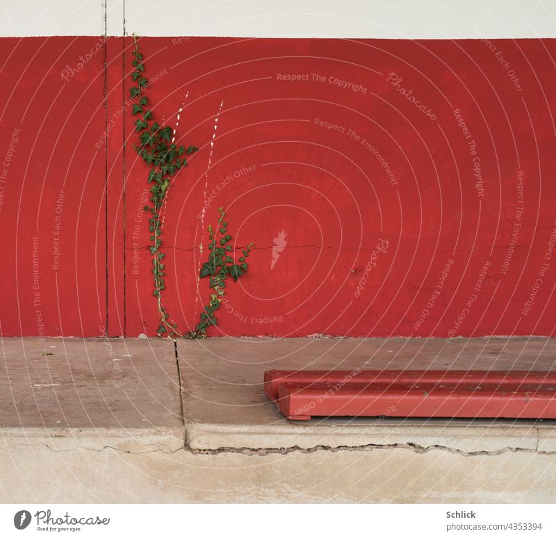 Red wall with ivy and bench in an old football stadium Wall (building) Ivy Concrete Crack & Rip & Tear background Exterior shot Plant Deserted Colour photo Day