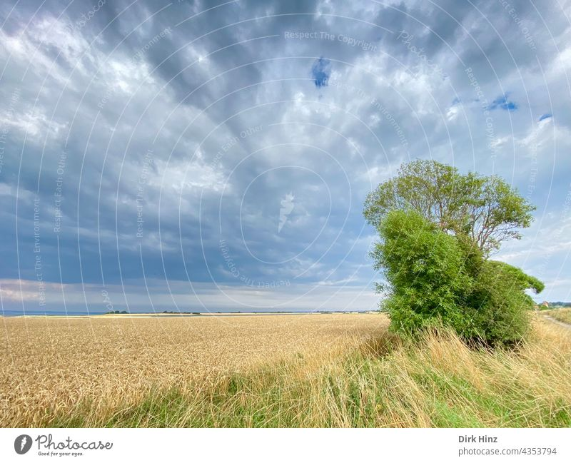 Agriculture on the Danish island of Bagö Denmark Sky Tree Clouds Field Summer Grain field Landscape Exterior shot Environment Deserted Growth Agricultural crop