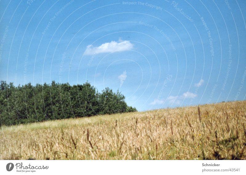 Meadows Idyll Green Wheat Grass Ilmenau Blue Sky XP Landscape