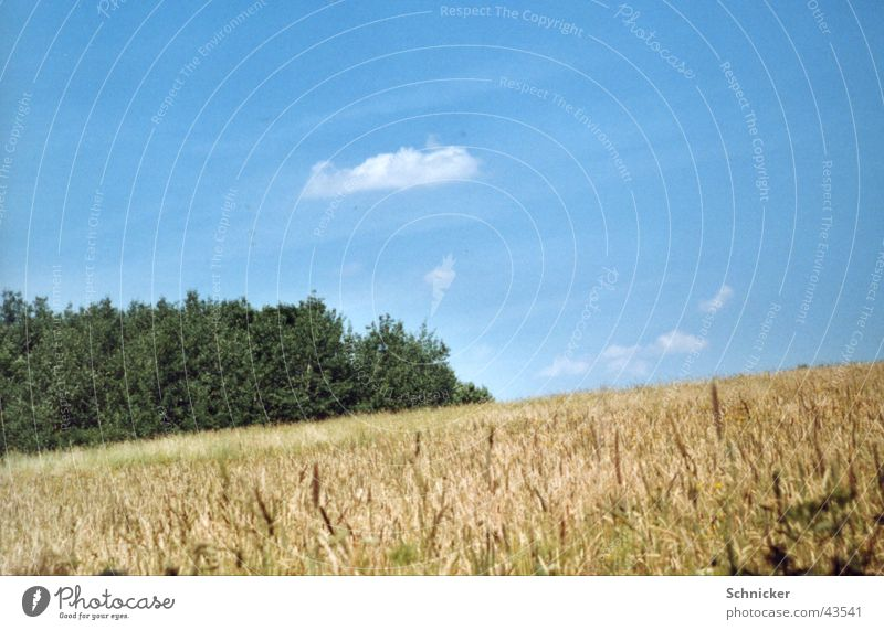 Sky Green Blue Meadow Grass Landscape Wheat Thuringia Ilmenau