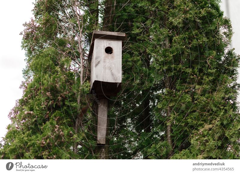 tree house for birds on the tree, birdhouse from the tree for wintering birds forest handmade park shelter wood feathered green hut nature nest promise season