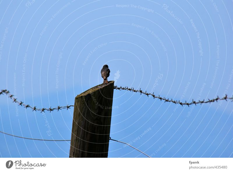 At the barbed wire fence Sky Summer Beautiful weather Animal Wild animal Bird songbird 1 Wood Free Blue Freedom Colour photo Exterior shot Day