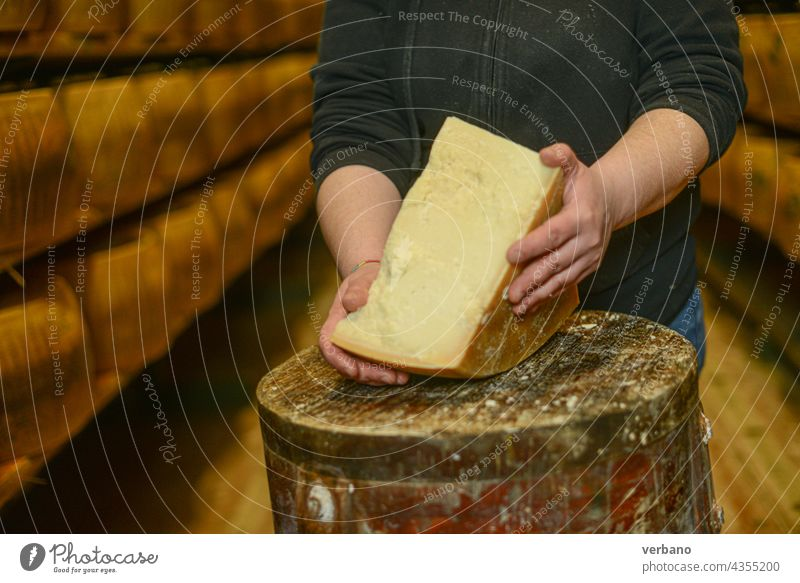 Cheese dairy master cutting a parmesan cheese wheel at the dairy facility storage - caveau Italy aged board business certified cheese-maker cheesemaking