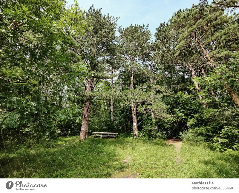 Good place for a hiking break Break hike Hiking Forest trees Bench Grass Green Woodground take a break playground break activity break time snack during breaks