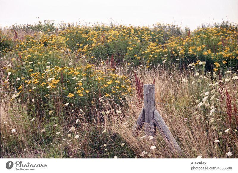 Baltic Sea dike full of flowers - flower meadow with fence post and wire fence Dike Hill Meadow Flower meadow Nature plants Red Yellow Green Summer