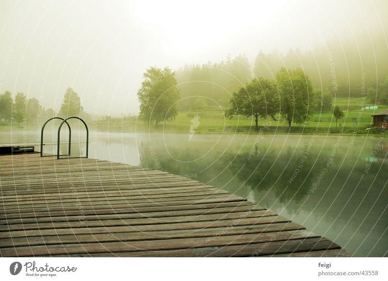 lakewood Lake Wood Fog Tree Swimming lake Water