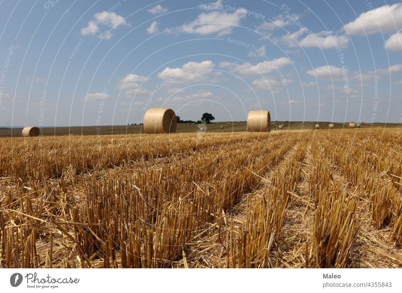 Harvested field with several rolled hay bales in Summer agricultural agriculture calm country countryside crop cylinder dry equipment farm farming fodder golden