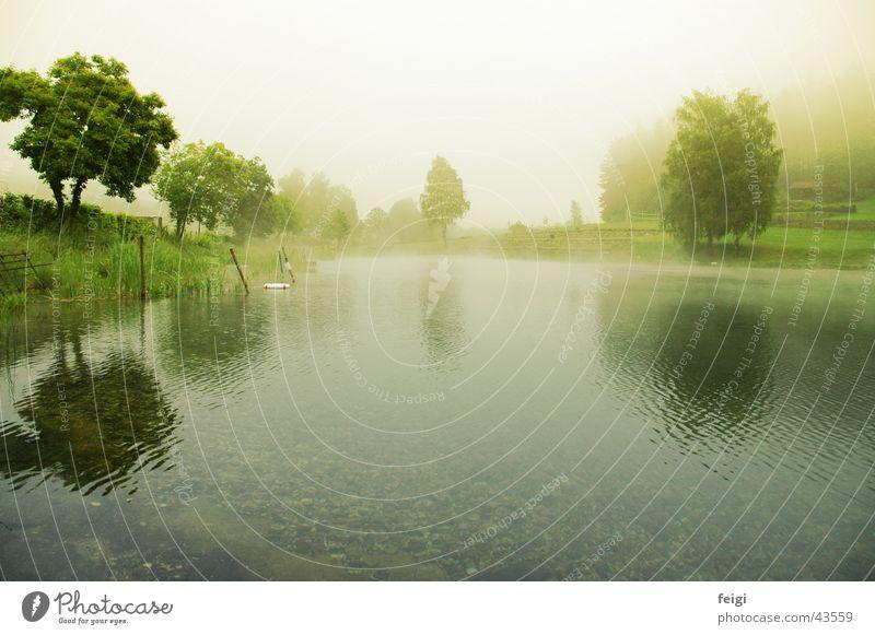 Water Tree Lake Fog Deep Pebble
