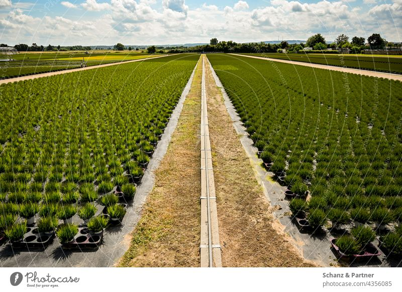 Plant Breeding Monoculture plants Potted plants Agriculture Horticulture Field Agricultural crop Exterior shot Growth pesticides organic Horizon Sky Clouds