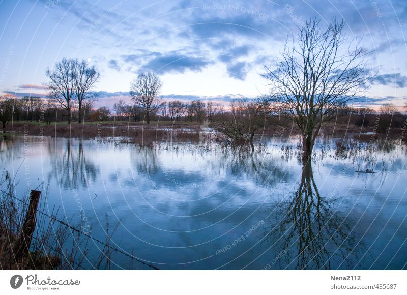 dreariness Environment Nature Landscape Air Water Winter Weather Tree Meadow Field Esthetic Threat Dark Fantastic Creepy Cold Wet Gloomy Blue Moody Deluge