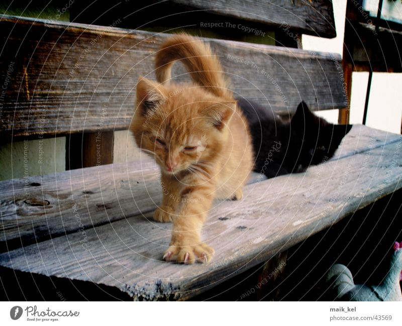 Nature Red Animal Cat Paw Pet Claw Domestic cat
